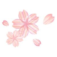 ピンクのストライプの桜の無料イラスト