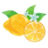 水玉模様が爽やかな、お花付きのレモンの無料イラストです。