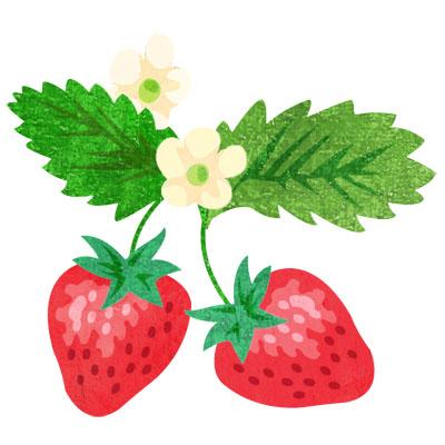 お花付きのおしゃれな苺の無料イラストです