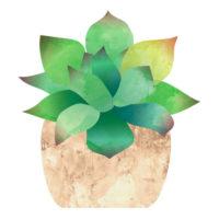 鉢植えの多肉植物の無料イラストです