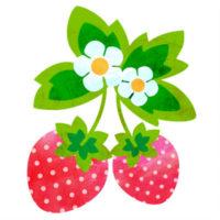 お花と葉っぱのついた、可愛いいちごの無料イラストです。