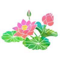 ピンクの大輪の蓮の花のイラストです。
