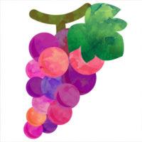 ジューシーな紫色のブドウの無料イラストです。