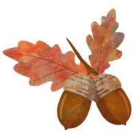 ブナの葉と2つ並んだ、どんぐりのおしゃれな無料イラストです。