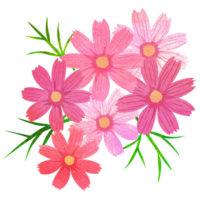 華やかなピンクのコスモスの花束イメージの無料イラストです。