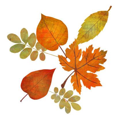 色々な種類の紅葉の無料イラストです。