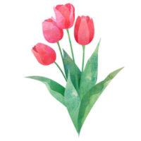 ピンクのチューリップのイラスト