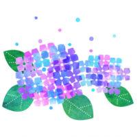 カラフルな紫陽花のイラストです。