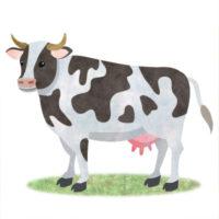 乳牛の無料イラスト