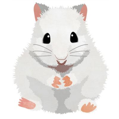 白いジャンがリアンハムスター(ねずみ)のイラストです。